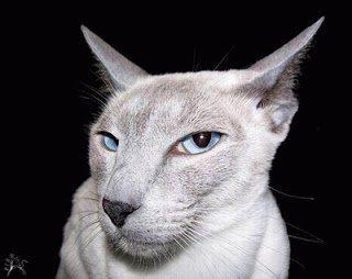 дневник кота юмор