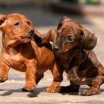 В каждом маленьком щеночке…