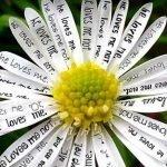 «Белая ромашка» — сценарий выкупа невесты