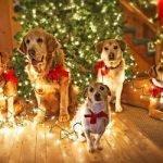 «Год Собаки» — новогодняя песня