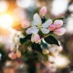 Лучше нету того цвету — оригинал и переделки песни