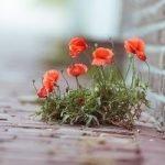 Городские цветы — оригинал и переделки песни