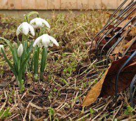 Весёлые апрельские субботники - стихи про субботник