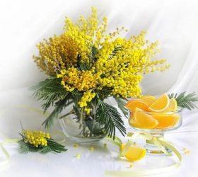 Жёлтые шарики нежной мимозы... - цветочные стихи (Мимоза)