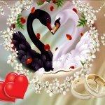 Свадьба и околосвадебное — тематическая подборка